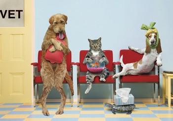 Картинки по запросу реклама в ветеринарии